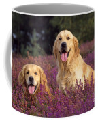 Golden Retriever Dogs In Heather Coffee Mug