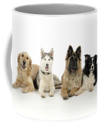 Golden Retriever, Husky, Tervuren Coffee Mug