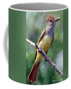 Great Crested Flycatcher With Captured Coffee Mug