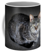 Grey Cat Portrait Coffee Mug