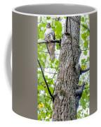 Hawk Hunting For A Squirrel On An Oak Tree Coffee Mug