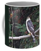 Hawk On Branch Coffee Mug