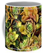 Hens And Chick Plants Coffee Mug