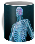 Human Skeleton And Brain, Artwork Coffee Mug
