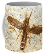 Insect Fossil Coffee Mug