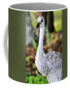 Juvenile Sandhill Crane Grus Canadensis Pratensis II Usa Coffee Mug