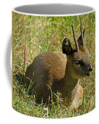 Klipspringer Antelope Coffee Mug