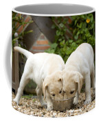 Labrador Puppies Eating Coffee Mug