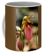 Lady Slippers At Moore State Park 2 Coffee Mug
