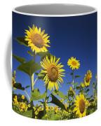 Laval, Quebec, Canada Sunflowers Coffee Mug