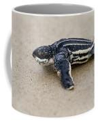 Leatherback Sea Turtle Hatchling Amelia Island Florida Coffee Mug