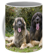 Leonberger Dogs Coffee Mug