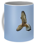 Lesser Kestrel Falco Naumanni Coffee Mug