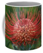 Leucospermum - Pincushion Protea - Tropical Sunburst Protea Flower Hawaii Coffee Mug
