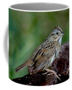 Lincolns Sparrow Coffee Mug