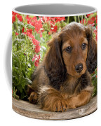 Long-haired Dachshund Coffee Mug