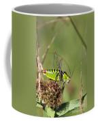 Long-horned Katydid Tettigonid Coffee Mug
