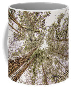 Looking Up At Snow Covered Tree Tops Coffee Mug