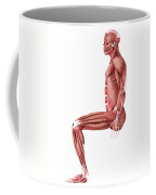 Medical Illustration Of Male Muscles Coffee Mug