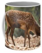 Mesopotamian Fallow Deer 2 Coffee Mug