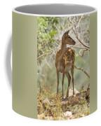 Mesopotamian Fallow Deer 5 Coffee Mug