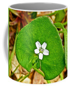 Miner's Lettuce In Park Sierra Near Coarsegold-california  Coffee Mug
