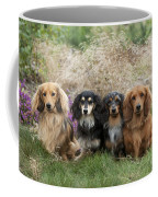 Miniature Long-haired Dachshunds Coffee Mug