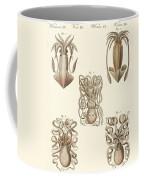 Molluscs Or Soft Worms Coffee Mug