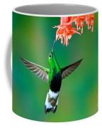 Mountain Velvetbreast Feeding Coffee Mug