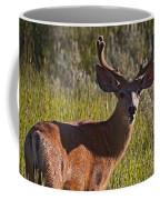 Mule Deer Buck In Velvet   #2164 Coffee Mug