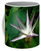 Narcissus In Jim Thompson House And Museum In Bangkok-thailand. Coffee Mug