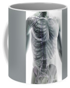 Nerves Of The Trunk Coffee Mug