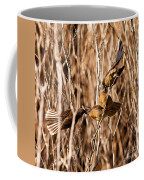 New Zealand Fantail Chicks Being Fed By Parents Coffee Mug