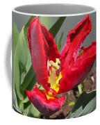 Parrot Tulip Named Rococo Coffee Mug