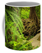 Path In Temperate Rainforest Coffee Mug by Elena Elisseeva