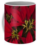 Poinsettia  - Euphorbia Pulcherrima Coffee Mug
