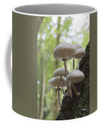 Porcelain Fungus Coffee Mug