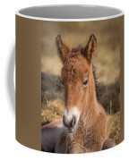 Portrait Of Newborn Foal Coffee Mug