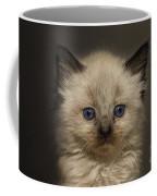 Precious Baby Kitty Coffee Mug