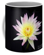 Pretty Pink And Yellow Water Lily Coffee Mug