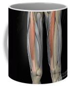 Rectus Femoris Muscles Coffee Mug