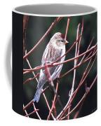 Redpoll Coffee Mug