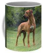 Rhodesian Ridgeback Dog Coffee Mug