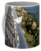 Royal Tern In Florida Coffee Mug