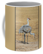 Sand Hill Cranes Eating Coffee Mug