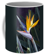 Seaport Bird Of Paradise Coffee Mug