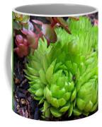 Sempervivum Tectorum Coffee Mug
