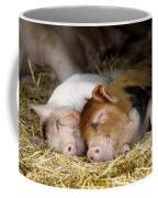 Sleeping Hogs  Coffee Mug