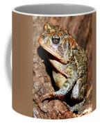 Southern Toad Bufo Terrestris Coffee Mug