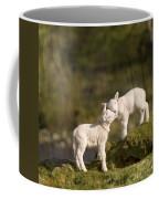 Sweet Little Lambs Coffee Mug